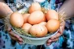 Продаю домашние куриные яйца
