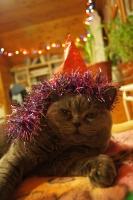 В ожидании Нового года